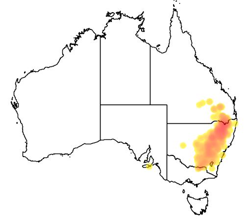 Eucalyptus dealbata flora location map