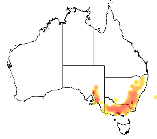 Eucalyptus goniocalyx flora location map