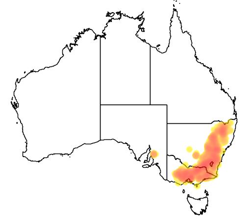 Eucalyptus macrorhyncha flora location map