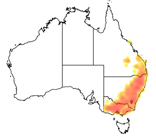 Eucalyptus melliodora flora location map