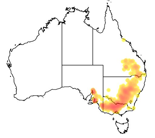 Eucalyptus microcarpa flora location map