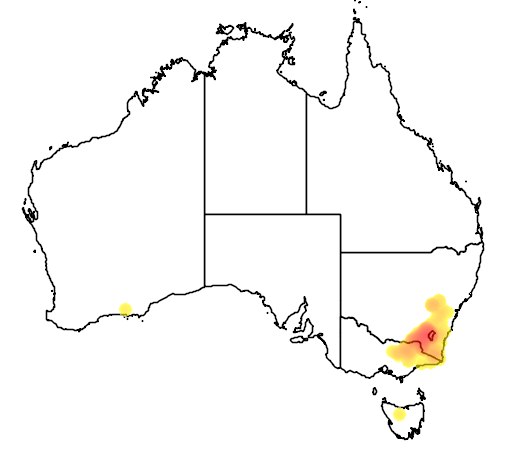 Eucalyptus robertsonii flora location map
