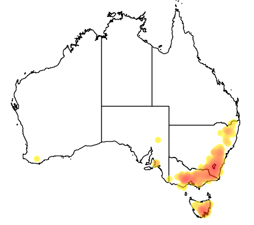 Eucalyptus rubida flora location map