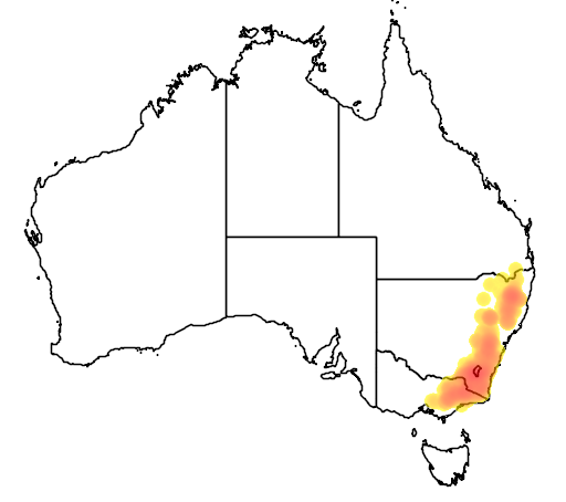 Eucalyptus stellulata flora location map
