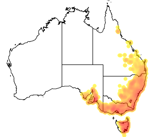 Exocarpos cupressiformis flora location map