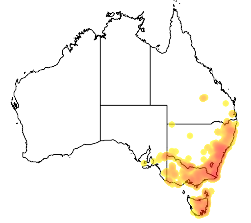 Exocarpos strictus flora location map