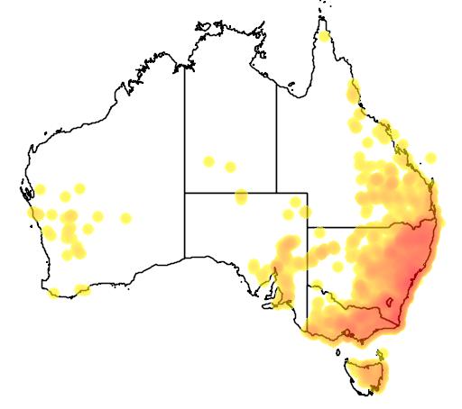 Glycine clandestina flora location map