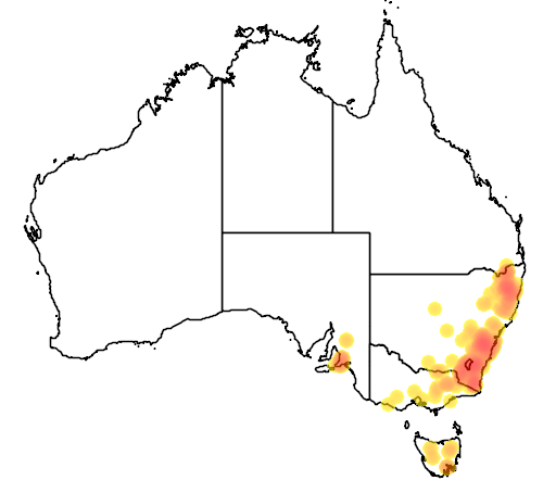 Helichrysum rutidolepis flora location map