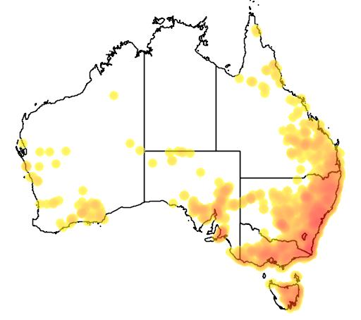 Indigofera australis flora location map