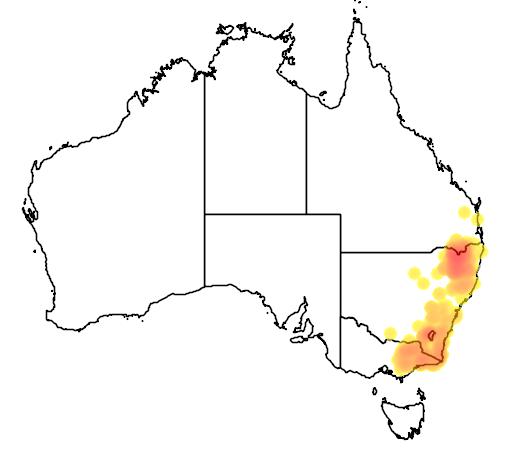 Leptospermum brevipes flora location map