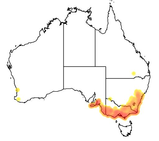 Leptospermum continentale flora location map