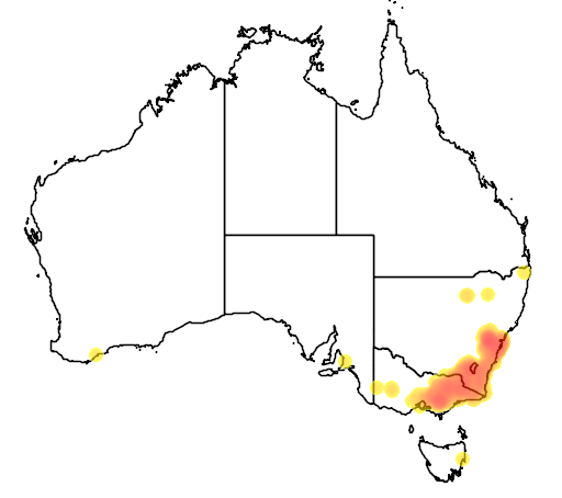 Leptospermum grandifolium flora location map