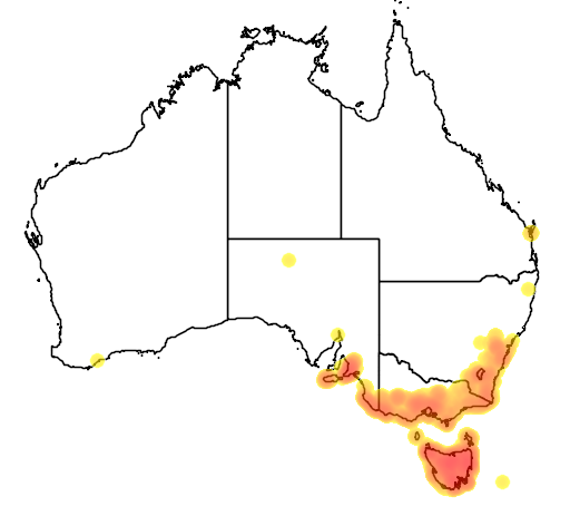 Leptospermum lanigerum flora location map
