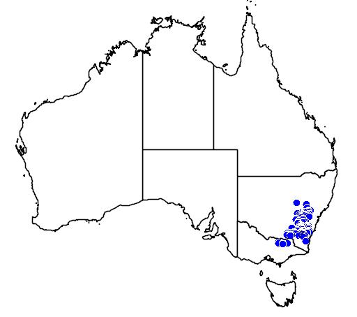 Leptospermum multicaule flora location map