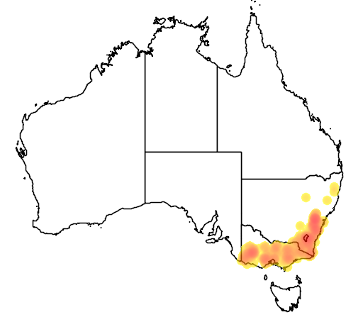 Leptospermum obovatum flora location map