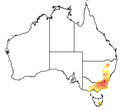 Mirbelia oxylobioides flora location map