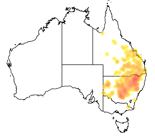 Parsonsia eucalyptophylla flora location map