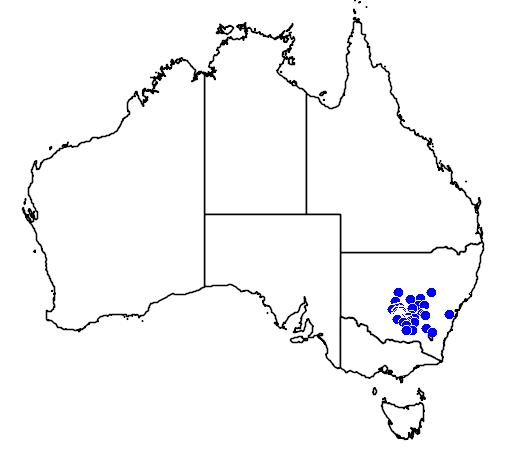 Philotheca myoporoides subsp acuta flora location map