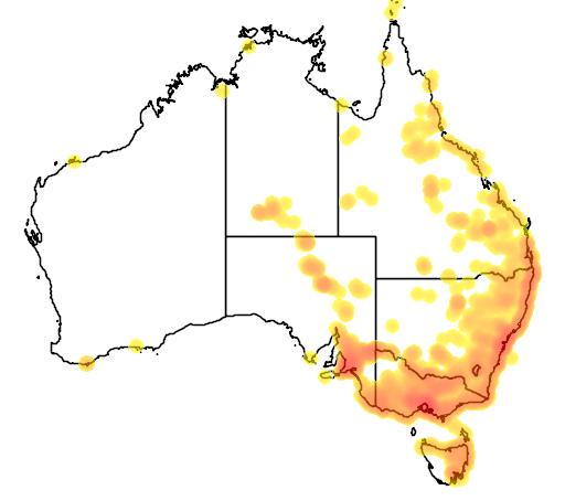 Phragmites australis flora location map