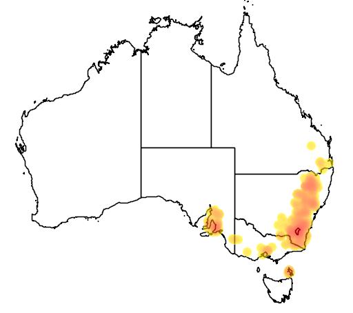 Pimelea curviflora var sericea flora location map