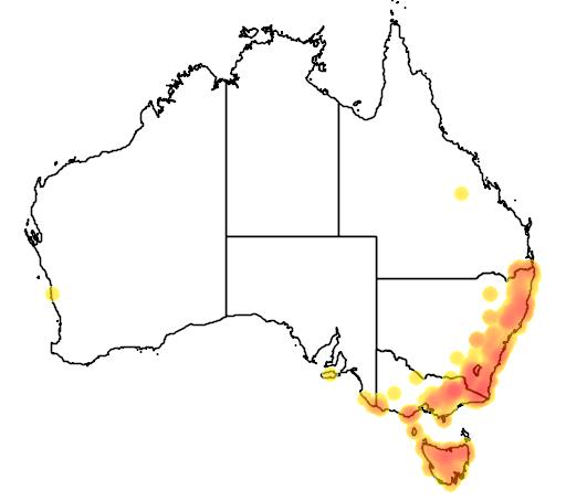 Pimelea ligustrina subsp ligustrina flora location map