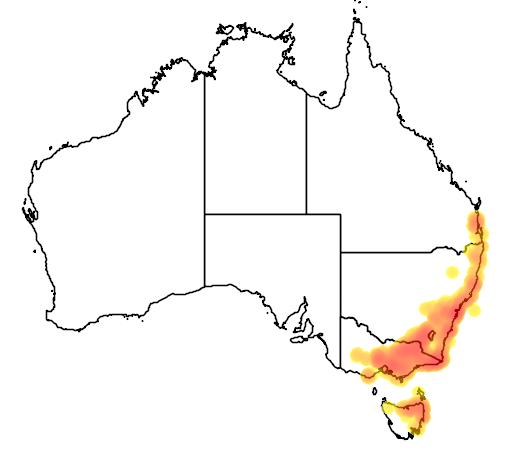 Platylobium formosum flora location map
