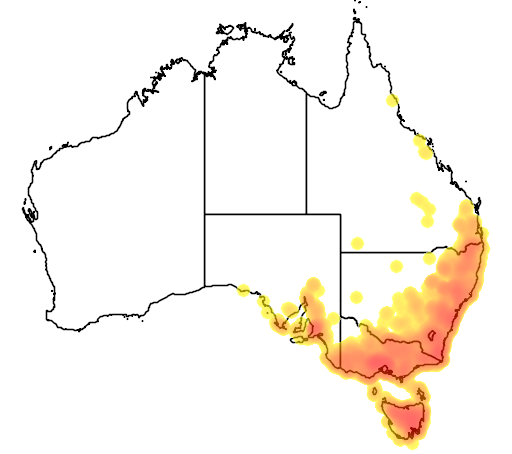 Poa labillardierei flora location map