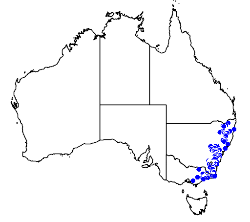 Pomaderris eriocephALA flora location map