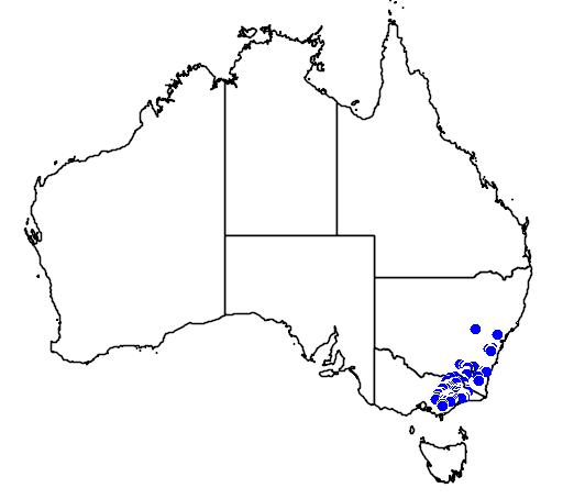 Pomaderris velutina flora location map