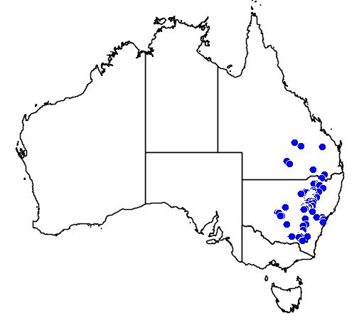 Ricinocarpos bowmanii flora location map