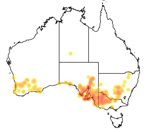 Solanum simile flora location map