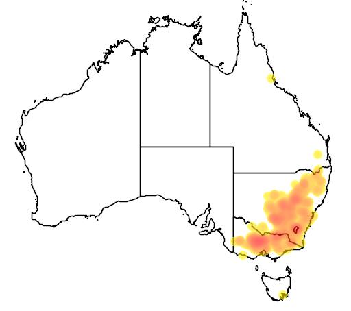Xerochrysum viscosum flora location map