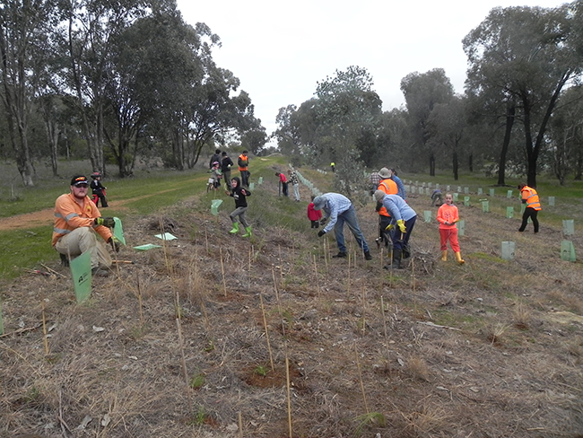 Planting event - 9-8-2015 - Woolshed Thurgoona Landcare Group