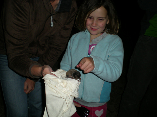 Bats at the Lake Hume Spillway - Woolshed Thurgoona Landcare Group