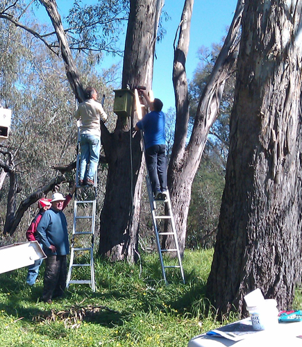 Installing nestboxes at the Lake Hume Spillway - Woolshed Thurgoona Landcare Group