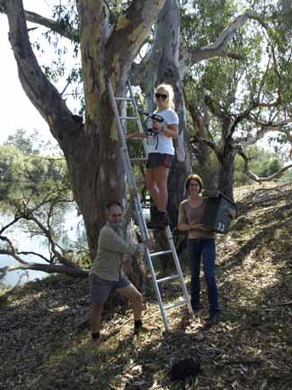 Nest box installation - Woolshed Thurgoona Landcare Group